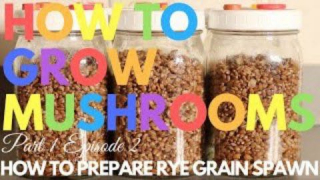 How To Prepare Rye Grain Spawn | How To Grow Magic Mushrooms | Part 1 Episode 2
