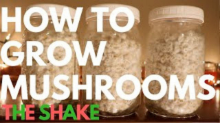 Shaking Mushroom Spawn Jars | How To Grow Magic Mushrooms | Part 3