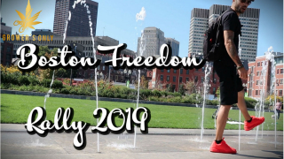 BOSTON FREEDOM RALLY 2019 | GROWERS ONLY CO VLOG #4 |