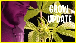 SLYME DAWG GROW UPDATE / BONG SESSION!