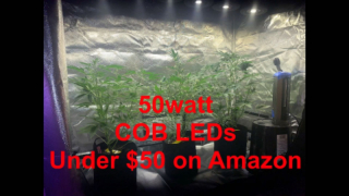 Forester's new recomedation for grow light