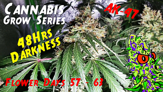 Cannabis Grow Series Ep.18 | How to Grow AK-47: Flower Stage Days 57 - 63 | 48Hrs Of Darkness!