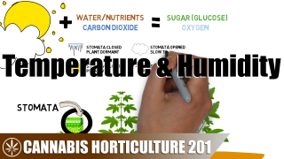 Understanding Cannabis Temperature & Humidity