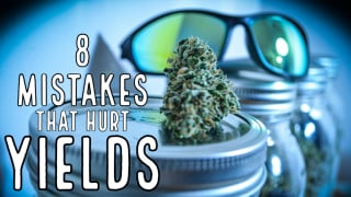 8 Mistakes That Hurt Yields