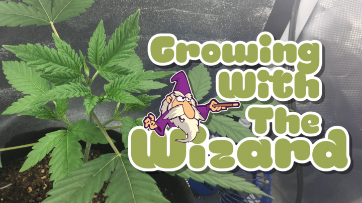 Growing With The Wizard - Grow 1 - Episode 28