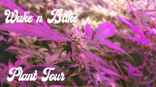 Wake n Bake + Plant Tour