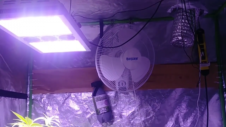 Budly Beerburgler80 using The Enhancer CO2 generator from TNB Naturals - Ninja fruit Day 15 flower
