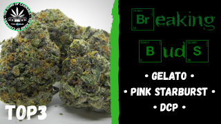 BREAKING BUDS #3 - Gelato, Pink Starburst & DCP (Strain Reviews)