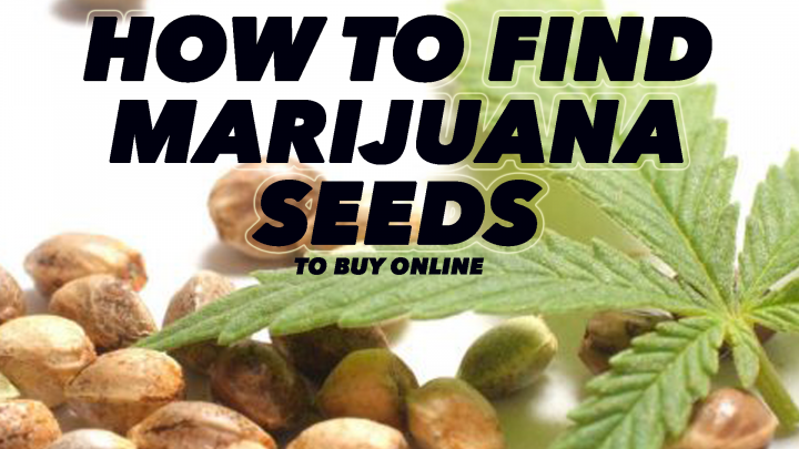 How To Find & Buy High Quality Medical Cannabis Seeds Online (Seed Buying Guide)