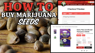 How To Buy Cannabis Seeds Online - How To Order Marijuana Seeds (Step by Step)