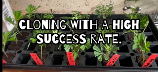 How to easily clone with high success rate.
