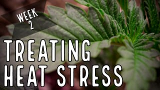 Season 2 (Week 2): How To Treat Heat Stress