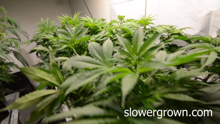 Is this the best LED grow light under $300?