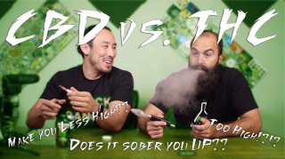CBD vs THC does CBD really sober you up??