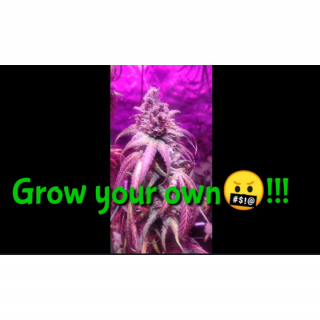 Grow your own shit !