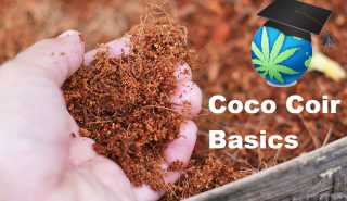 Growing Cannabis in Coco Coir Basics + My 'Feelings' On Coco...