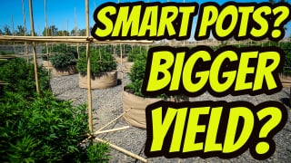 Can Smart Pots Increase Cannabis Yield?