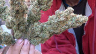 Saterdayz!!!! Wake and Bake W/ James from grow 420 TV!!!