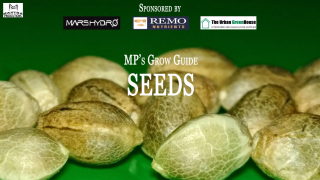 MP's Grow Guide- Seeds (Sponsored by Mars Hydro, Remo Nutrients & Urban Greenhouse)