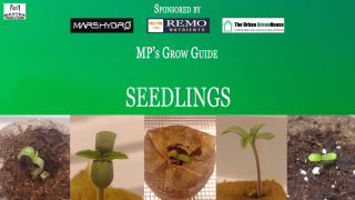 MP's Grow Guide- Seedlings (Sponsored by Mars Hydro, Remo Nutrients & Urban Greenhouse)