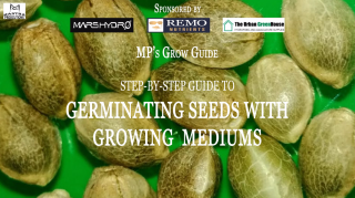 MP's Grow Guide- Germinating Seeds with Growing Mediums (Sponsored by Mars Hydro, Remo Nutrients & Urban Greenhouse)
