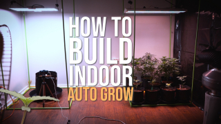 BUILDING AN INDOOR CANNABIS GROW FOR AUTOFLOWERS (No Smell)