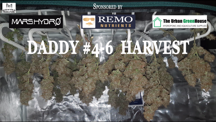 MP's Grow Guide- Daddy #4-6 Harvest (Sponsored by Mars Hydro, Remo Nutrients & Urban Greenhouse)