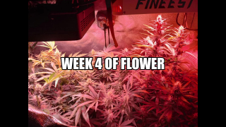 Zombie's Grow Episode #4