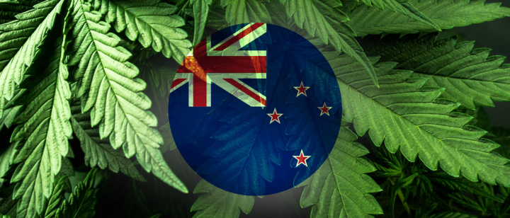 Breaking – New Zealand's' 2020 Draft Cannabis Legalisation and Control Bill is Up