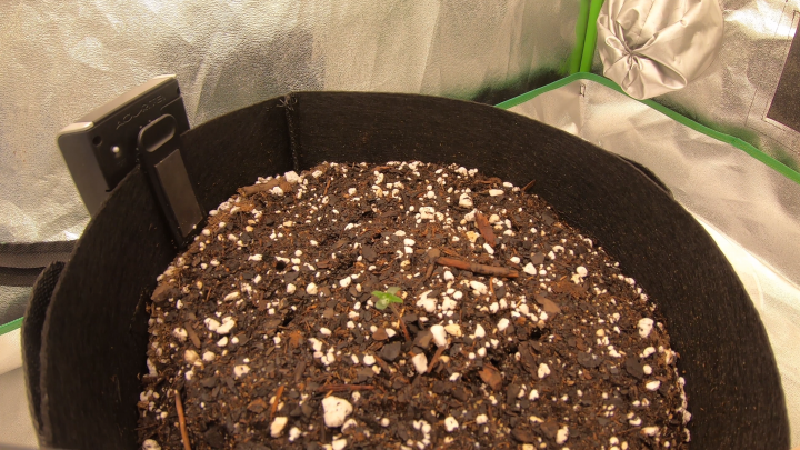 Seed Sprout Time Lapse