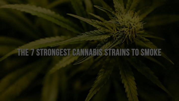 7 strongest cannabis strains to smoke..