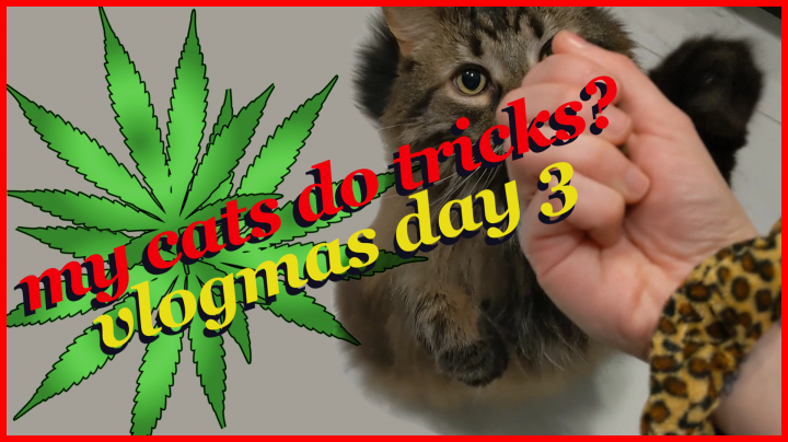 a day in the life | vlogmas 3 | kittenasylum