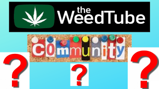 My Thoughts On The Weedtube Community? - FRIEDAYE
