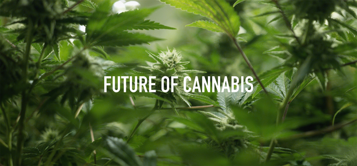 Episode 3: Future of Cannabis