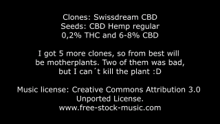 How to prepare pots for clones and seeds
