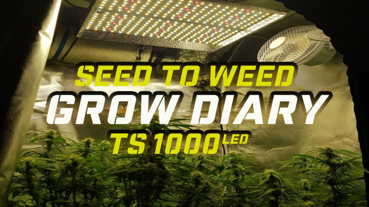 Cannabis Grow Journal From Seed To Weed - LST & TOPPING - Mars Hydro TS 1000 LED Grow Light