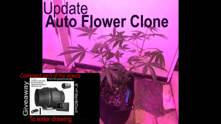 Forester's Flavor Forest (auto clones update)