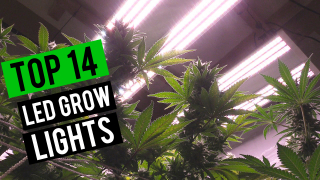 Best LED Grow Lights 2019! - 4x4 Flowering Coverage Area