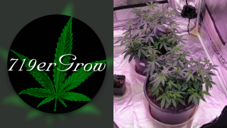 Indoor Cannabis Grow Update 3 b 3 grow tent