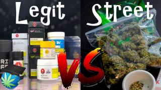 Retail Bud Vs All Other - WHICH IS BETTER QUALITY?