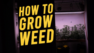 HOW TO GROW CLOSET WEED: Veg & Flower (Part 3 of 4 )