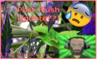 Post Flush Update! | Mistake Corrections