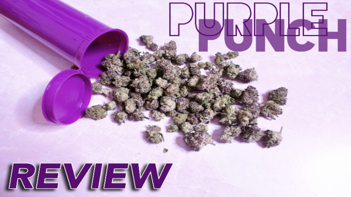 STRAIN REVIEW - Purple Punch