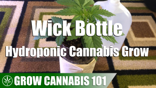 Wick Bottle Hydro Cannabis Timelapse Grow - Bagseed To Flower