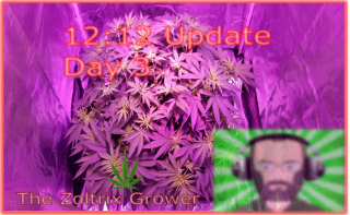 12 On, 12 Off Update #1 | Day 3 lights on! | Flowering Soon!