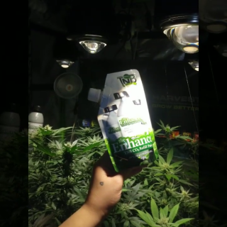 veedub grow Grow with TNB Naturals CO2 generator called The Enhancer. Refill Pack also available