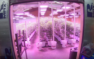 Tour Of My Commercial Grow Flower Rooms