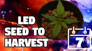Budget LED Cannabis Grow /  Episode 2