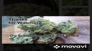 chemdawg Review