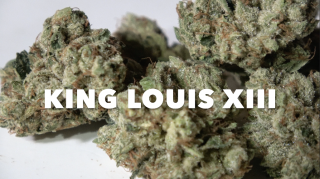 King Louis XIII (28.4% THC) (Strain Review #13)